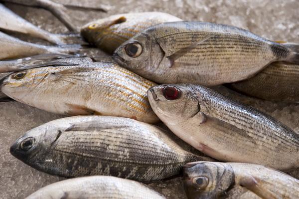 9 เคล็ดลับแก้ปัญหาสารพัดเมนูปลา.. ให้การทำทุกเมนูปลาเป็นไปง่ายขึ้น