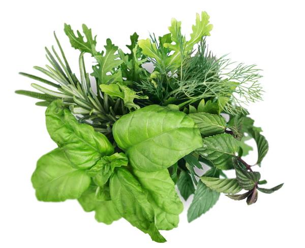 กะเพรา โหระพา พืชสวนครัวกับคุณประโยชน์ที่ไม่ควรมองข้าม